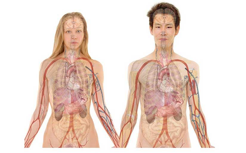גוף-האדם-מזור-שירותי-בריאות