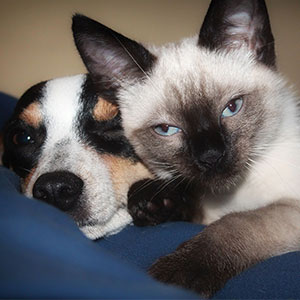 חתול-וכלב