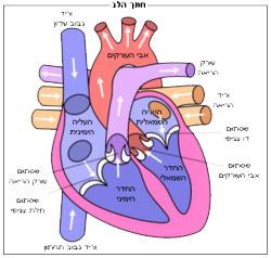 לב-מזור-שירותי-בריאות